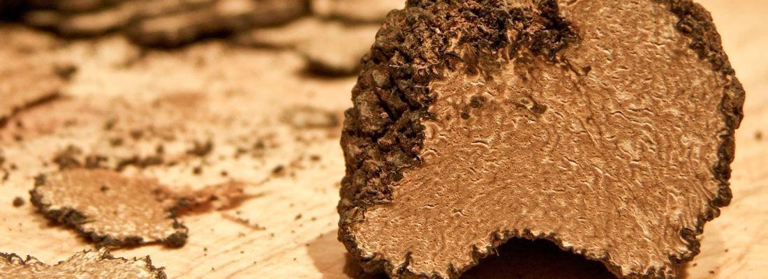 truffle_italy_marche