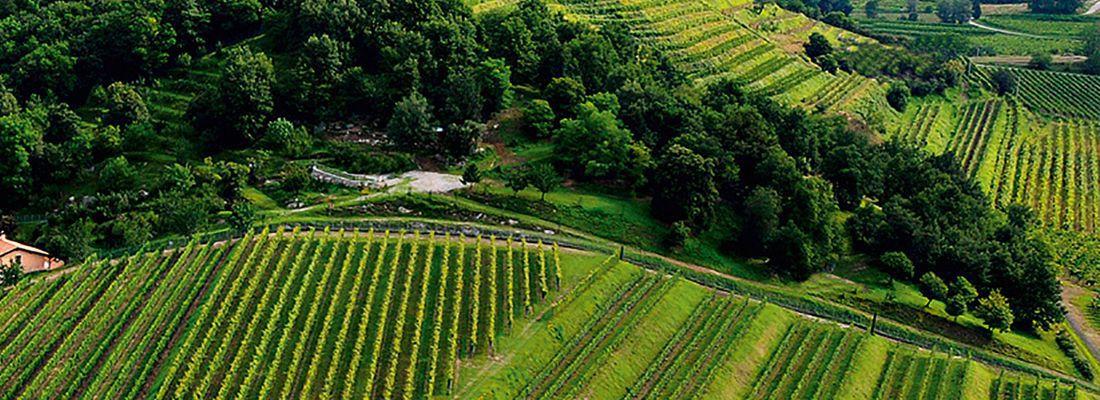 vineyard_tour_marche